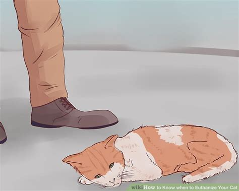 when to euthanize an how to when to euthanize your cat with pictures wikihow