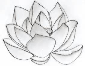 Simple Lotus Drawing Lotus Flower Flower Hd Wallpapers Images Pictures