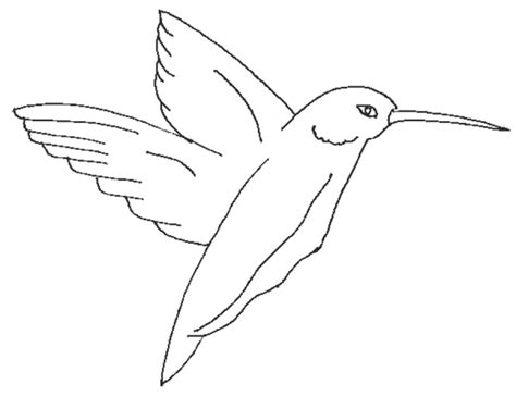 kingfisher coloring pages kingfisher printable coloring page for kids