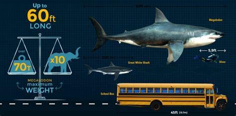megalodon shark size megalodon size comparison blue whale