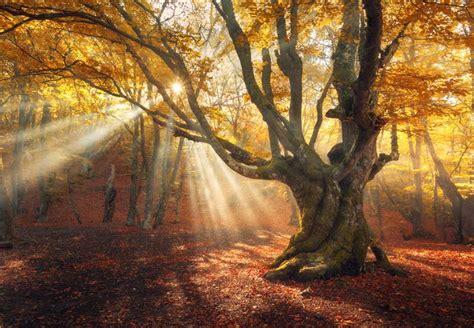 autumn sun rays   tree backdrop mybackdropcouk