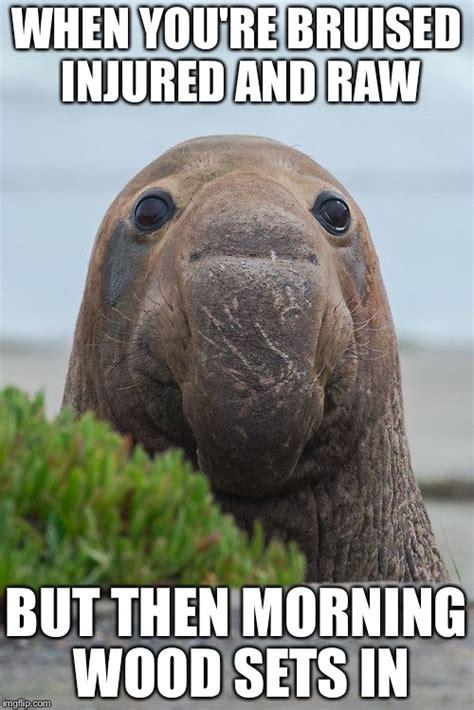Elephant Memes - elephant seal meme www imgkid com the image kid has it