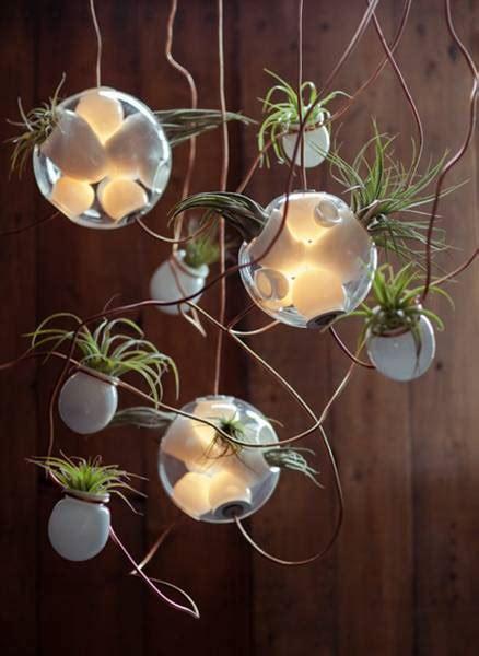 pendant lights  glass plant terrariums  bocci