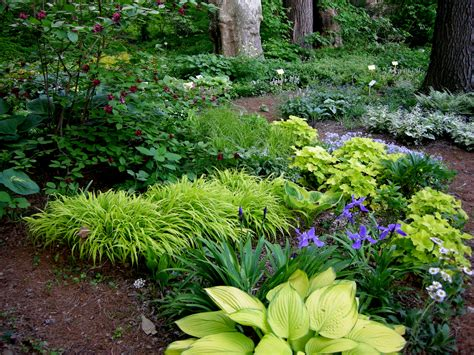 Shade Garden Ideas Woodland Garden On Pinterest Shade Plants Hosta Gardens And Heuchera