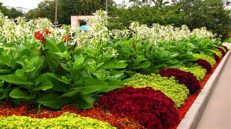 blumenbeet ideen charming flower bed ideas front of house homes with