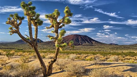 mojave desert joshua tree