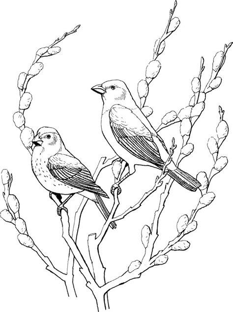 coloring pages birds and insects 126 best images about birds insects etc coloring pages 2