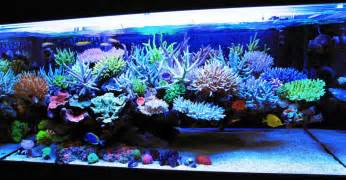Types Of Aquarium by Types Of Fish Tanks You Can Have About Pet Animals And
