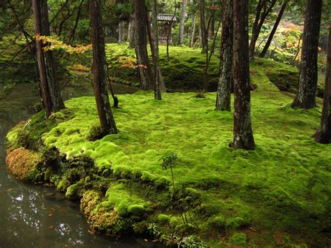 ancient japanese gardens its moss garden is commonly referred to as quot koke dera quot 苔寺
