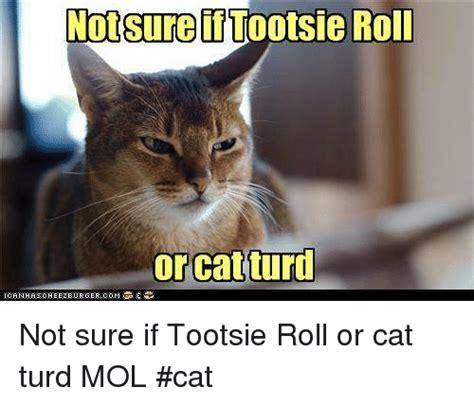 Cat Fart Meme - funny cat fart memes of 2017 on sizzle porke