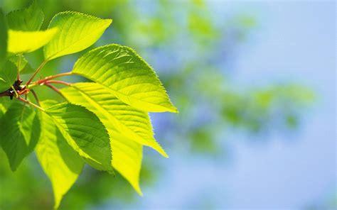 imagenes fondo de pantalla naturaleza fondos de pantalla de naturaleza medioambiente y naturaleza