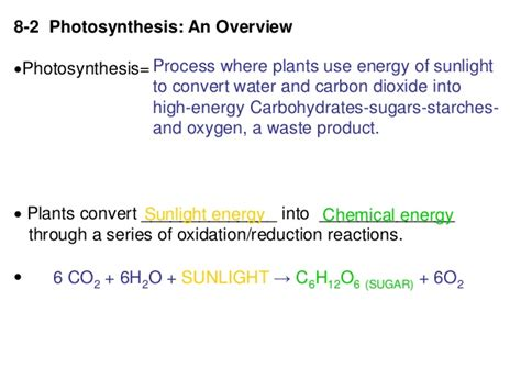 section 8 2 photosynthesis section 8 2 photosynthesis an overview 100 images