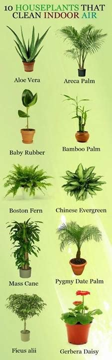 easy to take care of indoor plants indoor plants that clean indoor air it is easy to