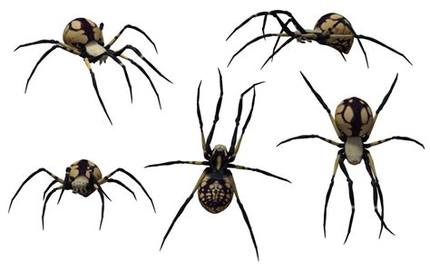 spider tattoo png black widow spider drawing