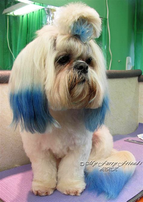 good grooming proper hairstyles 17 best images about shih tzu hairstyles on pinterest
