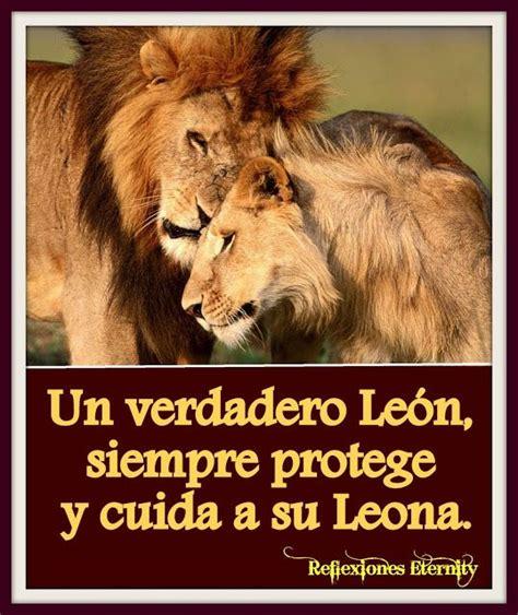 imagenes de leones fuertes imagenes de leones con frases de amor 7 frases