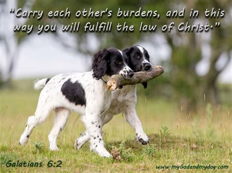 bible verses about dogs bible quotes quotesgram