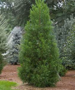 Pictures Of Cedar Trees » Ideas Home Design