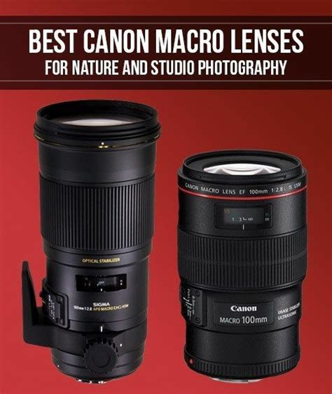 Best Canon Macro Lenses for Nature and Studio Photography
