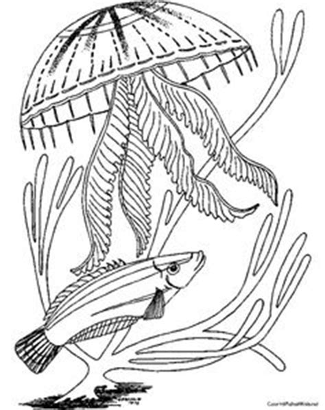 realistic jellyfish coloring pages coloring microsoft windows and jellyfish drawing on pinterest
