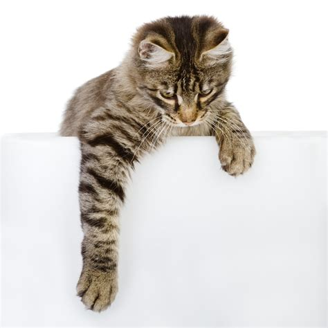 dear tabby cat won t stop clawing furniture cattime