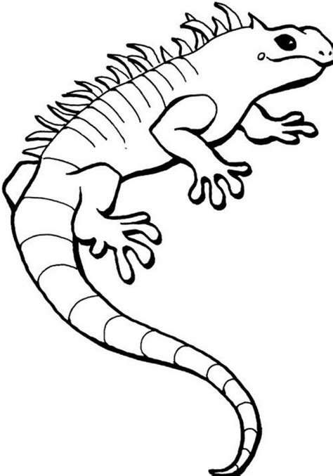 Coloring Page For by Free Printable Iguana Coloring Pages For