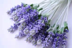 body diy benefits of the lavender plant design sorbet
