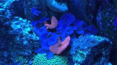 Lu Akuarium Diy in wall reef aquarium with diy live rock 11 24 15