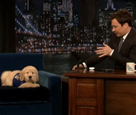 jimmy fallon puppies pet scoop jimmy fallon talks bowl with puppy predictor phil sees his shadow
