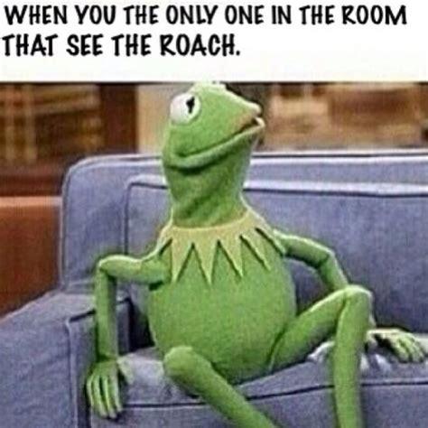 Kermit The Frog Memes - funny kermit the frog memes jokes etc nigeria