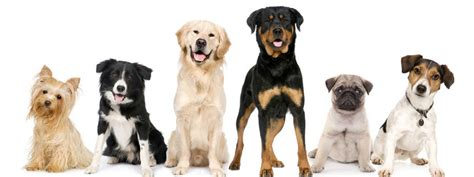 all the breeds of dogs day care days daycare days daycare