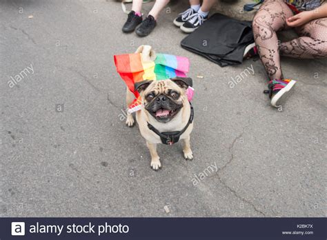 pugs montreal clothers stock photos clothers stock images alamy