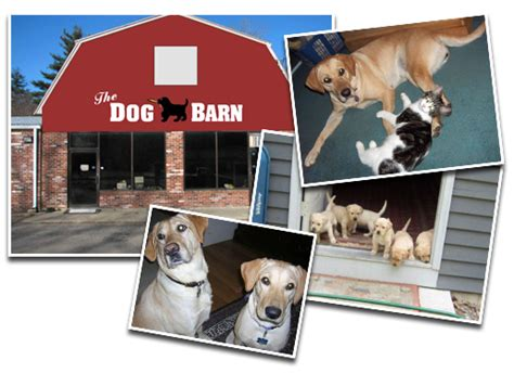 dog barn dog barn home