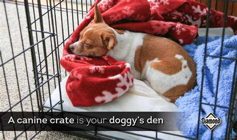 crate training crate training your dog offers benefits for all diamond