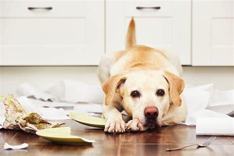 cani da casa il a casa da sporca e fa danni i consigli per