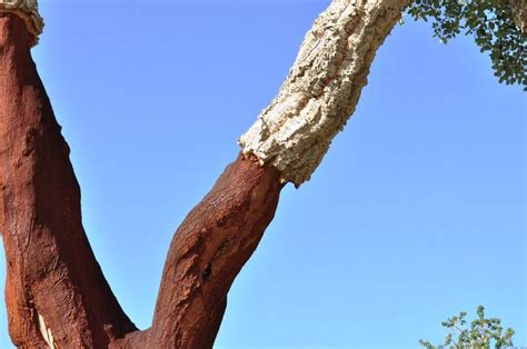 hypoallergenic tree hypoallergenic trees 28 images list of the most