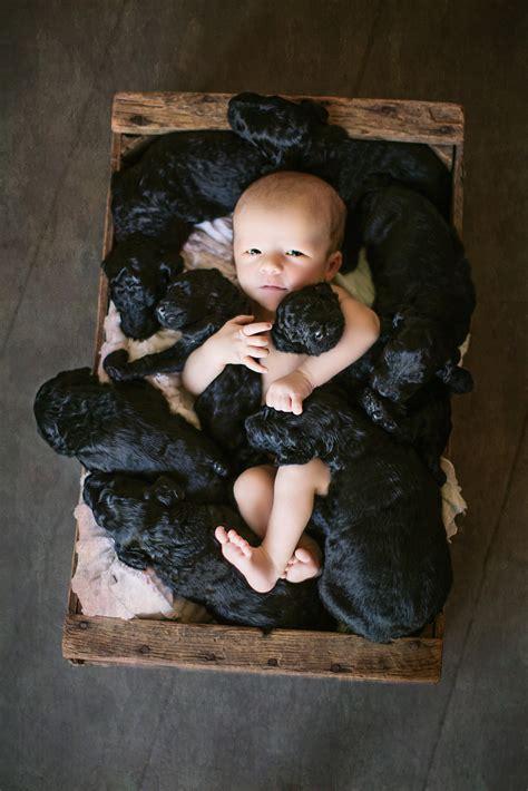 newborn puppy photoshoot baby toddlers parenting this newborn baby photo shoot featuring 9 puppies