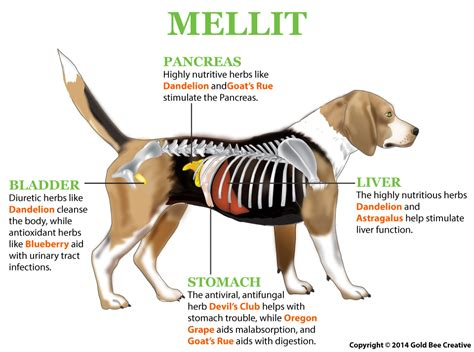 diabetes in puppies nhv mellit for dogs diabetes support nhv pet products