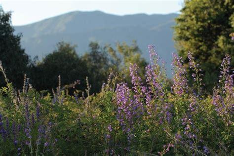 Rancho Santa Ana Botanic Garden In Claremont Ca Botanical Gardens Claremont Ca