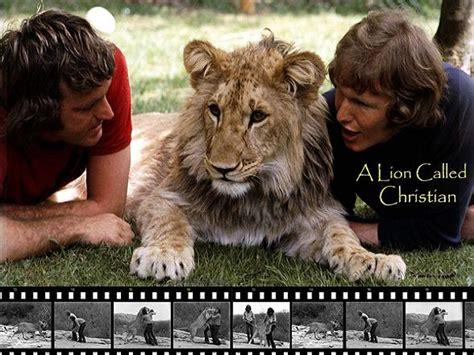 film about lion from harrods christian the lion een prachtig verhaal