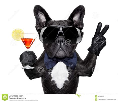cocktail dogs cocktail stock photo image 40248203