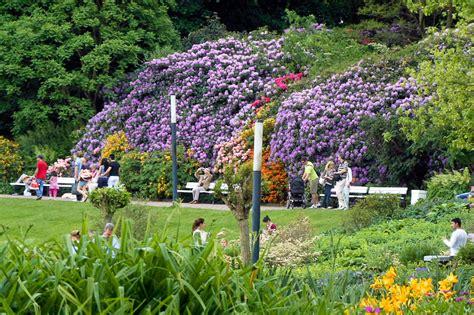 Pflanzen Für Japanischen Garten 2376 by Bildung Und Reisen Zu Fischen Und Pflanzen