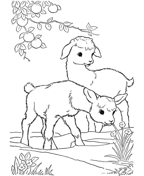 printable animal coloring pages pdf farm animal coloring pages printable kid goats coloring