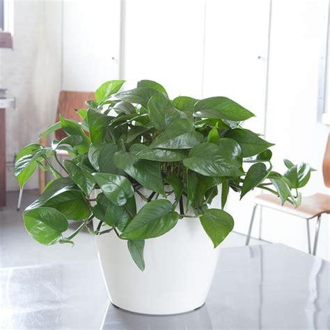 good houseplants for low light pinterest the world s catalog of ideas