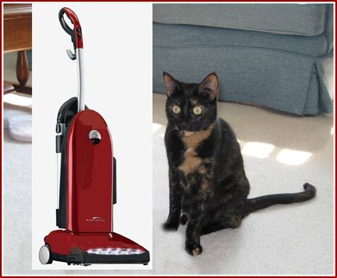 Cat Vaccum cats and vacuum cleaners