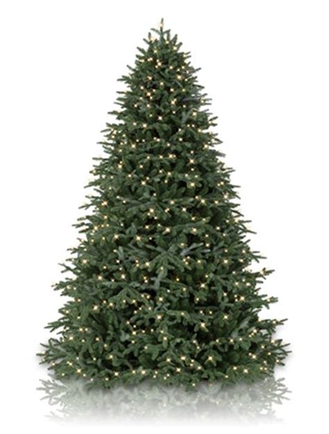 bh fraser fir artificial christmas tree balsam hill uk