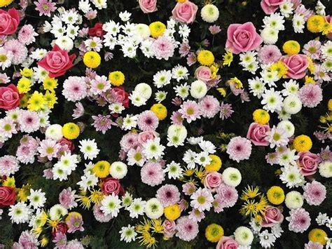 bloemen stoelinga internationale vrouwendag nieuws bloemisterij