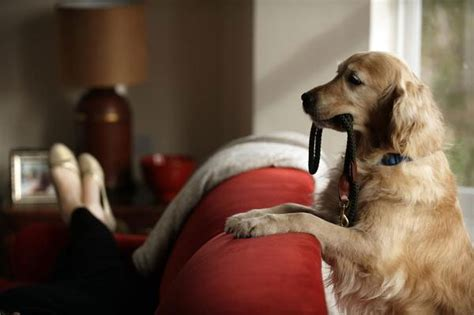 how to keep your dog off the sofa keeping your dog off the beloved furniture dog training