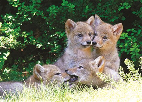 17 best images about marin county wild life on pinterest
