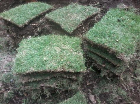 Jual Bibit Rumput Lapangan Bola rumput lapangan jual rumput gajah mini rumput jepang murah